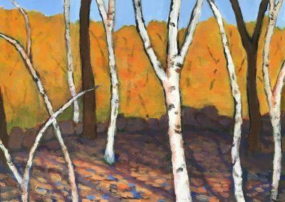 Birch Patterns