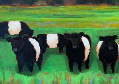 Contemplative Cows